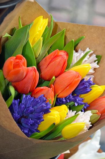 ดอกทิวลิป (Tulip)