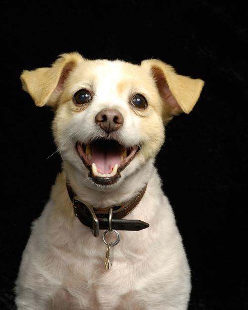 10 วิธีกำจัดกลิ่นปากสุนัข ปัญหาเล็ก ๆ ที่อาจอันตรายต่อร่างกาย !