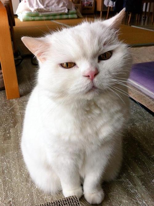 อุระ แมวเซเลบ 17 ปี เหมียวแก่น่ารักที่ใคร ๆ ก็อยากรู้จัก