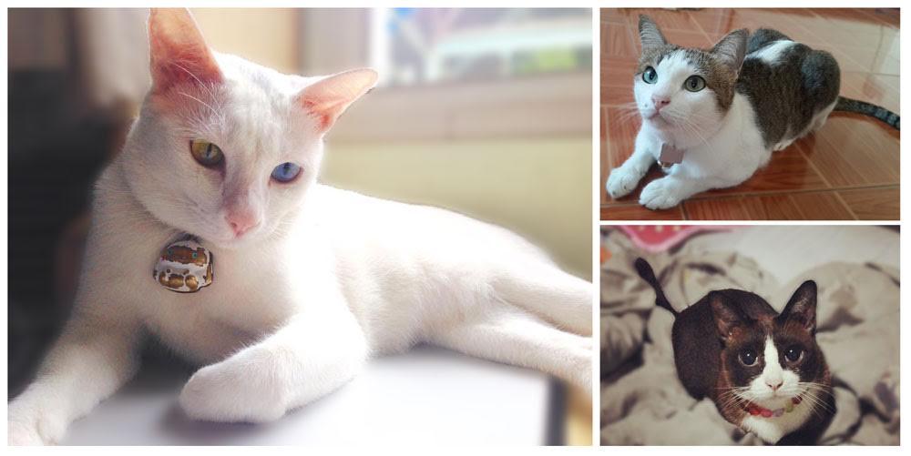 แมวสุขภาพดีเปลี่ยนแปลงได้จริงใน 30 วัน