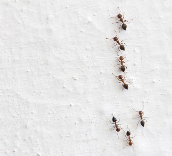 20 วิธีไล่แมลงแบบธรรมชาติ ภูมิปัญญาชาวบ้านไม่ง้อสารเคมี