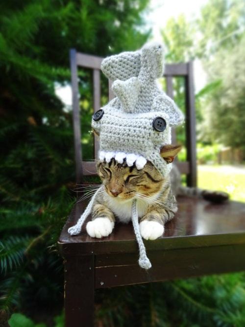 หมวกไหมพรมหมา หมวกไหมพรมแมว
