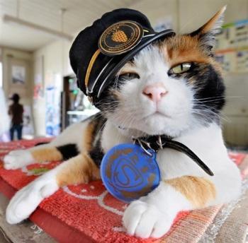 เจ้าทามะ อดีตนายสถานีแห่งสถานีรถไฟคิชิ
