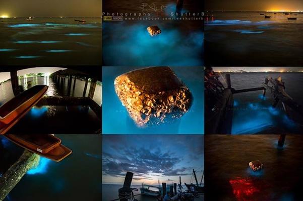 ทะเลเรืองแสง @ หาดบางแสน ของดีที่ไม่ควรพลาด !