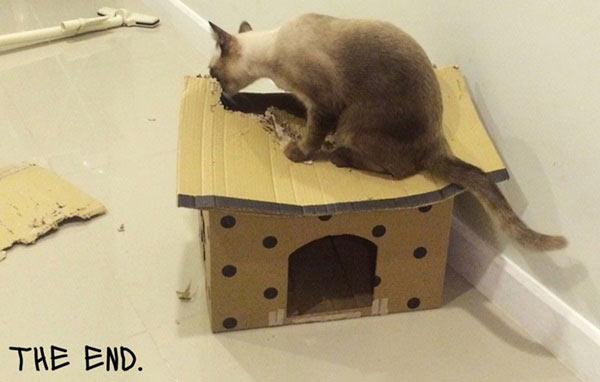 บ้านแมว
