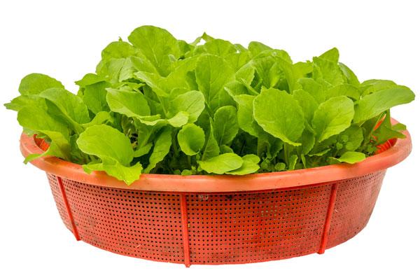 วิธีปลูกผักในกระถาง
