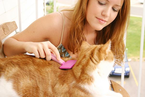 วิธีกำจัดหมัดแมว