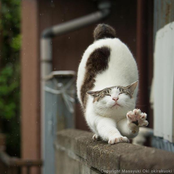รูปแมวตลก ๆ