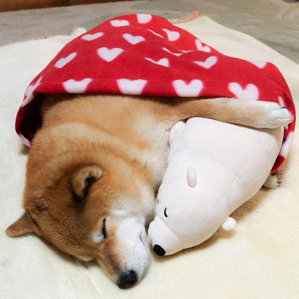 หมาเลียนแบบท่าตุ๊กตาหมี