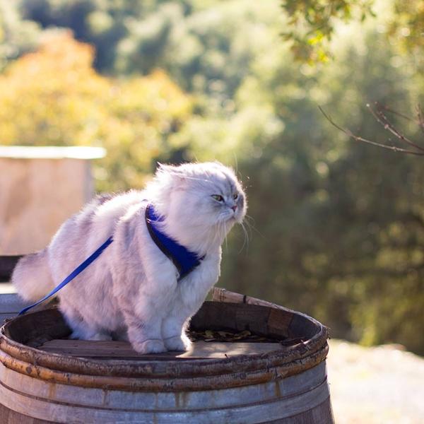 แกนดอล์ฟ แมวนักเดินทางตัวฉกาจกับทริปท่องโลกที่มนุษย์ต้องอิจฉา !