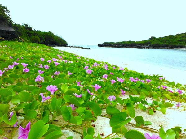 เกาะจาน เกาะท้ายทรีย์ ประจวบฯ