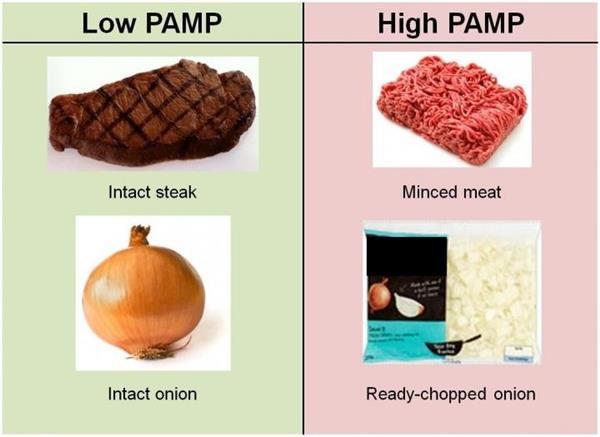 กินอาหารที่สับ-บด แช่ไว้ในตู้เย็น อาจเสี่ยงโรคหลอดเลือดหัวใจ
