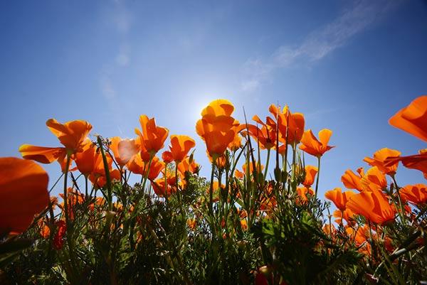 ทุ่งดอกไม้ที่สวยที่สุดในโลก