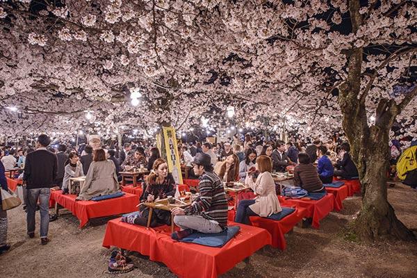 ซากุระญี่ปุ่น 2017