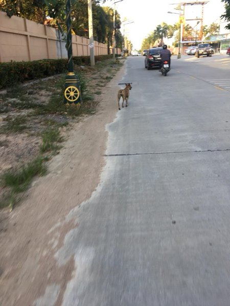 สุนัขถูกทิ้ง