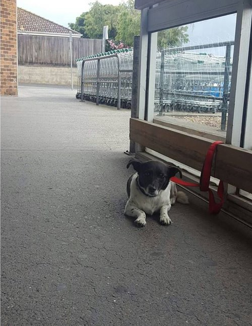 Sad Dogs Outside Shops