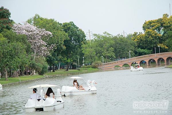 ชมพูพันธุ์ทิพย์ สวนจตุจักร 2560