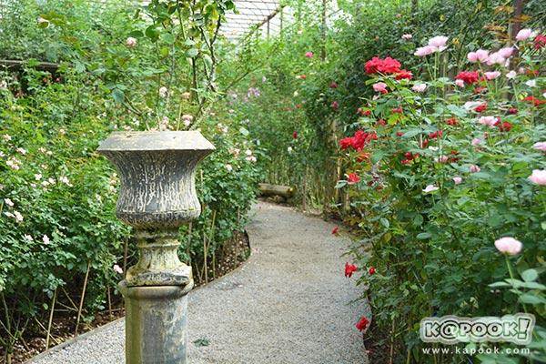 สวนกุหลาบห้วยผักไผ่
