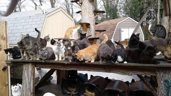 บ้านแมวจรจัด
