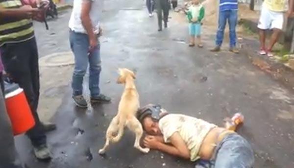 หมาปกป้องเจ้านาย