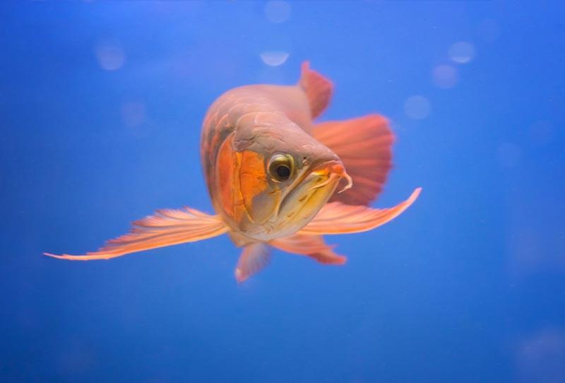 เลี้ยงปลาอย่างไรให้เงินไหลเข้าบ้าน