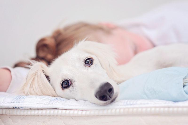 สัญญาณโรคซึมเศร้าของสุนัข