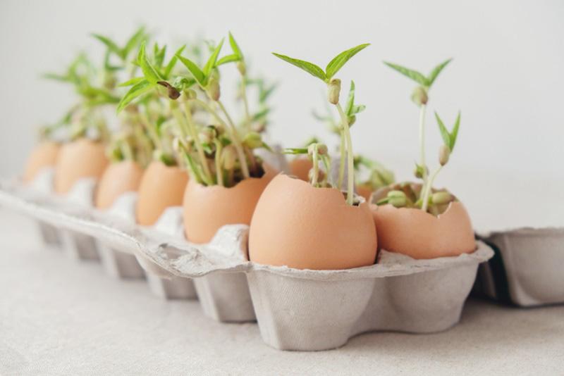 วิธีปลูกผักพื้นที่น้อย