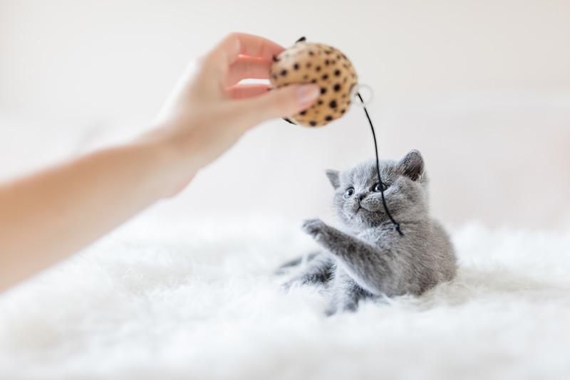วิธีเลี้ยงแมว