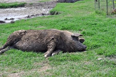 แอบดูท่านอนที่ไม่ธรรมดา ของบรรดาสัตว์โลกน่ารัก