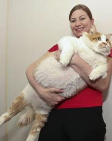 ตัวแทบแตก! เจ้าการ์ฟิลด์ เหมียวอ้วนที่สุดในโลก