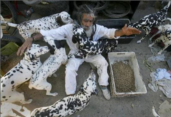 ชายชิลีเลี้ยงสุนัขลายจุดจรจัดกว่า 42 ตัว หลังดูหนัง 101 ดัลเมเชียน