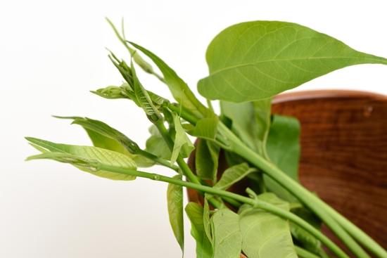 9 พืชผักมหัศจรรย์