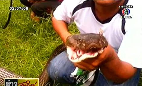 งูจงอางยักษ์