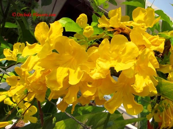 ปลูกไม้ดอกสะพรั่งบาน นานตลอดปี