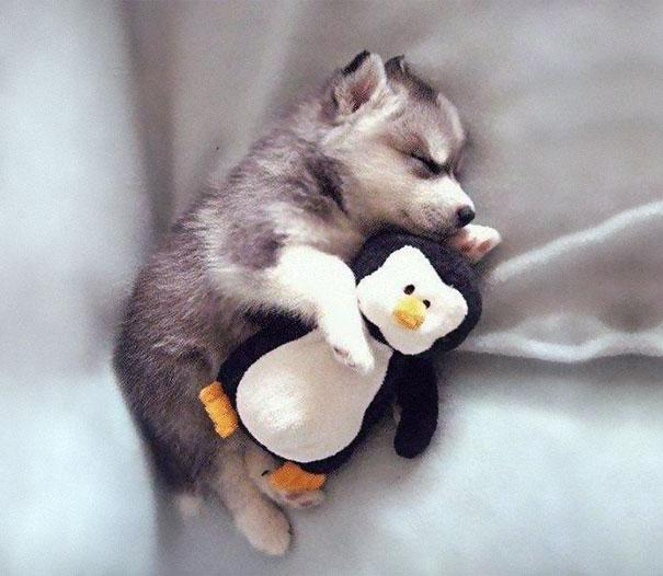 ภาพสัตว์น่ารัก ๆ