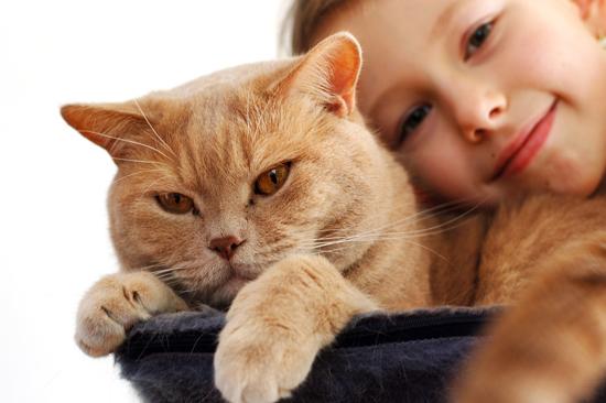 24 เหตุผล..ทำไมคนต้องเลี้ยงแมวสักครั้งในชีวิต – RTB Group