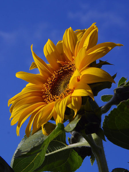 12 ไม้ดอกไม้ประดับ ที่นิยมปลูกติดบ้าน