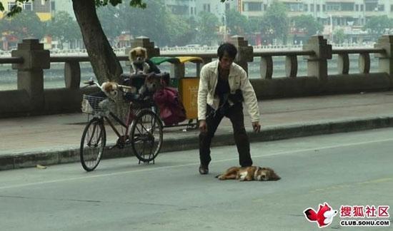 สะเทือนใจ! เผยภาพชายจีนพยายามผายปอดสุนัขที่ถูกรถชนตาย