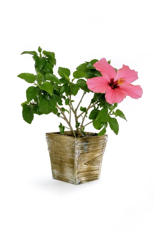 สารพัดไม้ดอกประดับ สำหรับตกแต่งบ้าน