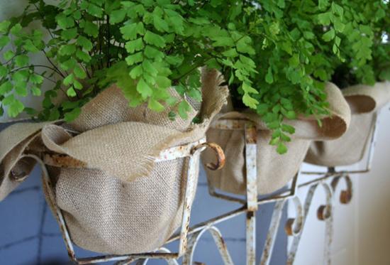 สารพัดไอเดียปลูกต้นไม้ในกระถางให้สดชื่นน่ามอง