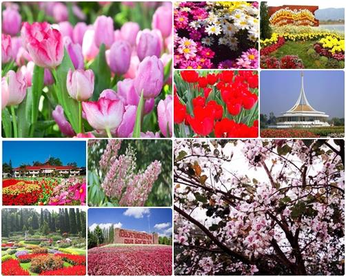 เทศกาลดอกไม้บาน