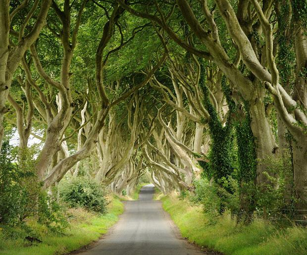10 อุโมงค์ต้นไม้สุดสวย ที่ใครได้เห็นเป็นต้องทึ่ง