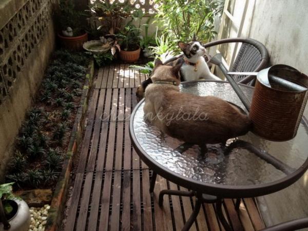จัดสวนเล็ก ๆ เอาใจน้องแมว ไอเดียเจิดของคนรักสัตว์
