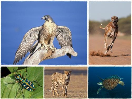 สัตว์ 10  ชนิด ที่เคลื่อนไหวเร็วที่สุดในโลก